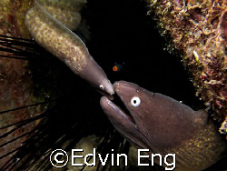 A Mother's Love! Was Taken In Tioman Island With Canon S80. by Edvin Eng 